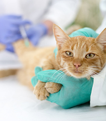 services Red Oak Animal Hospital, LLC